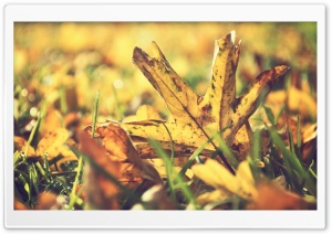 Dried Leafage HD Wide Wallpaper for Widescreen