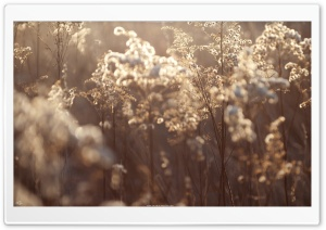 Dried Vegetation HD Wide Wallpaper for 4K UHD Widescreen desktop & smartphone