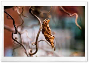 Dried Vine Leaf HD Wide Wallpaper for Widescreen