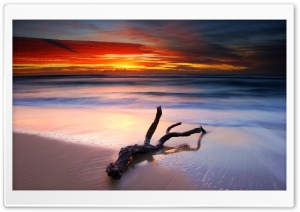 Driftwood And Spectacular Sunset HD Wide Wallpaper for Widescreen