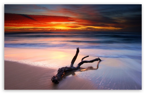 Driftwood And Spectacular Sunset HD wallpaper for Wide 16:10 5:3 Widescreen WHXGA WQXGA WUXGA WXGA WGA ; HD 16:9 High Definition WQHD QWXGA 1080p 900p 720p QHD nHD ; Standard 4:3 5:4 3:2 Fullscreen UXGA XGA SVGA QSXGA SXGA DVGA HVGA HQVGA devices ( Apple PowerBook G4 iPhone 4 3G 3GS iPod Touch ) ; Tablet 1:1 ; iPad 1/2/Mini ; Mobile 4:3 5:3 3:2 16:9 5:4 - UXGA XGA SVGA WGA DVGA HVGA HQVGA devices ( Apple PowerBook G4 iPhone 4 3G 3GS iPod Touch ) WQHD QWXGA 1080p 900p 720p QHD nHD QSXGA SXGA ; Dual 16:10 5:3 16:9 4:3 5:4 WHXGA WQXGA WUXGA WXGA WGA WQHD QWXGA 1080p 900p 720p QHD nHD UXGA XGA SVGA QSXGA SXGA ;