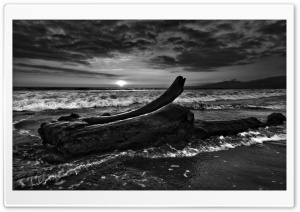 Driftwood Beach Monochrome HD Wide Wallpaper for Widescreen