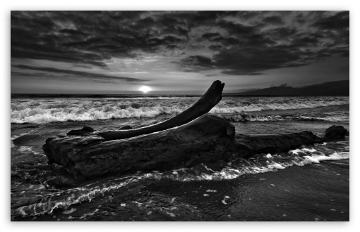 Driftwood Beach Monochrome HD wallpaper for Wide 16:10 5:3 Widescreen WHXGA WQXGA WUXGA WXGA WGA ; HD 16:9 High Definition WQHD QWXGA 1080p 900p 720p QHD nHD ; Standard 4:3 5:4 3:2 Fullscreen UXGA XGA SVGA QSXGA SXGA DVGA HVGA HQVGA devices ( Apple PowerBook G4 iPhone 4 3G 3GS iPod Touch ) ; Tablet 1:1 ; iPad 1/2/Mini ; Mobile 4:3 5:3 3:2 16:9 5:4 - UXGA XGA SVGA WGA DVGA HVGA HQVGA devices ( Apple PowerBook G4 iPhone 4 3G 3GS iPod Touch ) WQHD QWXGA 1080p 900p 720p QHD nHD QSXGA SXGA ;
