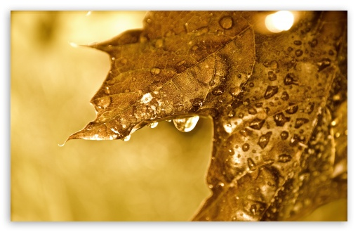 Dripping Golden Leaf ❤ 4K UHD Wallpaper for Wide 16:10 5:3 Widescreen WHXGA WQXGA WUXGA WXGA WGA ; 4K UHD 16:9 Ultra High Definition 2160p 1440p 1080p 900p 720p ; UHD 16:9 2160p 1440p 1080p 900p 720p ; Standard 4:3 5:4 3:2 Fullscreen UXGA XGA SVGA QSXGA SXGA DVGA HVGA HQVGA ( Apple PowerBook G4 iPhone 4 3G 3GS iPod Touch ) ; Tablet 1:1 ; iPad 1/2/Mini ; Mobile 4:3 5:3 3:2 16:9 5:4 - UXGA XGA SVGA WGA DVGA HVGA HQVGA ( Apple PowerBook G4 iPhone 4 3G 3GS iPod Touch ) 2160p 1440p 1080p 900p 720p QSXGA SXGA ; Dual 16:10 5:3 16:9 4:3 5:4 WHXGA WQXGA WUXGA WXGA WGA 2160p 1440p 1080p 900p 720p UXGA XGA SVGA QSXGA SXGA ;