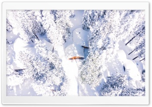 Drone Photography Winter Snow Forest Landscape Ultra HD Wallpaper for 4K UHD Widescreen desktop, tablet & smartphone