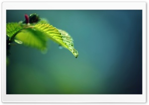 Drop and Green HD Wide Wallpaper for Widescreen