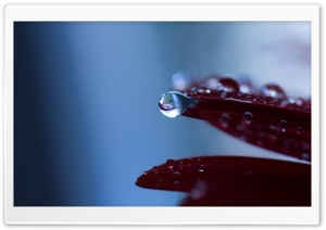 Drop Macro HD Wide Wallpaper for Widescreen