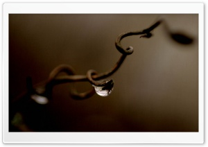 Drop Of Water Brown HD Wide Wallpaper for Widescreen