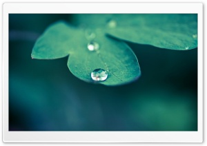 Drop Of Water, Macro HD Wide Wallpaper for Widescreen