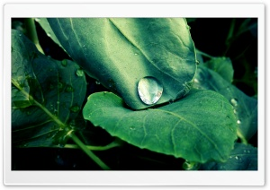 Drop on the Leaves HD Wide Wallpaper for Widescreen