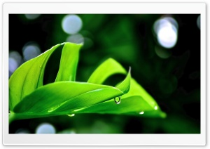 Droplet On Leaf HD Wide Wallpaper for Widescreen