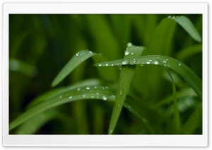 Drops HD Wide Wallpaper for Widescreen