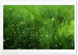 Drops Ultra HD Wallpaper for 4K UHD Widescreen desktop, tablet & smartphone