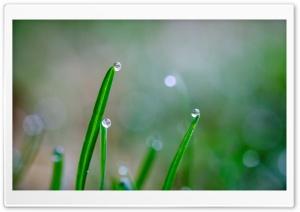 Drops of Rain Ultra HD Wallpaper for 4K UHD Widescreen desktop, tablet & smartphone