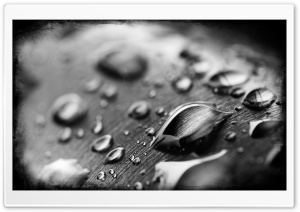 Drops Of Water Black And White HD Wide Wallpaper for Widescreen