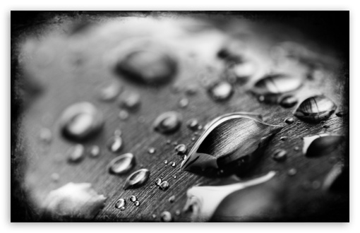 Drops Of Water Black And White HD wallpaper for Wide 16:10 5:3 Widescreen WHXGA WQXGA WUXGA WXGA WGA ; HD 16:9 High Definition WQHD QWXGA 1080p 900p 720p QHD nHD ; Other 3:2 DVGA HVGA HQVGA devices ( Apple PowerBook G4 iPhone 4 3G 3GS iPod Touch ) ; Mobile WVGA iPhone PSP - WVGA WQVGA Smartphone ( HTC Samsung Sony Ericsson LG Vertu MIO ) HVGA Smartphone ( Apple iPhone iPod BlackBerry HTC Samsung Nokia ) Sony PSP Zune HD Zen ;