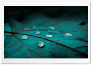Drops On Emerald Leaf HD Wide Wallpaper for Widescreen