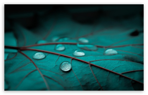 Drops On Emerald Leaf ❤ 4K UHD Wallpaper for Wide 16:10 5:3 Widescreen WHXGA WQXGA WUXGA WXGA WGA ; 4K UHD 16:9 Ultra High Definition 2160p 1440p 1080p 900p 720p ; Standard 4:3 5:4 3:2 Fullscreen UXGA XGA SVGA QSXGA SXGA DVGA HVGA HQVGA ( Apple PowerBook G4 iPhone 4 3G 3GS iPod Touch ) ; Tablet 1:1 ; iPad 1/2/Mini ; Mobile 4:3 5:3 3:2 16:9 5:4 - UXGA XGA SVGA WGA DVGA HVGA HQVGA ( Apple PowerBook G4 iPhone 4 3G 3GS iPod Touch ) 2160p 1440p 1080p 900p 720p QSXGA SXGA ;