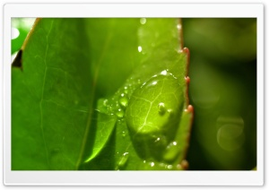 Drops On Leaves 2 HD Wide Wallpaper for Widescreen