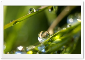 Drops On Leaves 4 HD Wide Wallpaper for Widescreen