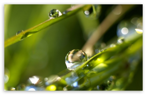 Drops On Leaves 4 ❤ 4K UHD Wallpaper for Wide 16:10 5:3 Widescreen WHXGA WQXGA WUXGA WXGA WGA ; 4K UHD 16:9 Ultra High Definition 2160p 1440p 1080p 900p 720p ; Standard 4:3 5:4 3:2 Fullscreen UXGA XGA SVGA QSXGA SXGA DVGA HVGA HQVGA ( Apple PowerBook G4 iPhone 4 3G 3GS iPod Touch ) ; Tablet 1:1 ; iPad 1/2/Mini ; Mobile 4:3 5:3 3:2 16:9 5:4 - UXGA XGA SVGA WGA DVGA HVGA HQVGA ( Apple PowerBook G4 iPhone 4 3G 3GS iPod Touch ) 2160p 1440p 1080p 900p 720p QSXGA SXGA ;