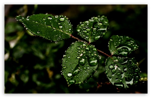 droplets on leaves 4k - photo #13