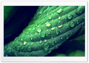 Drops On Leaves 9 HD Wide Wallpaper for Widescreen