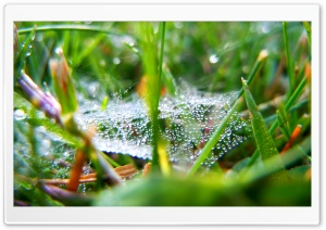 Drops On The Web HD Wide Wallpaper for Widescreen