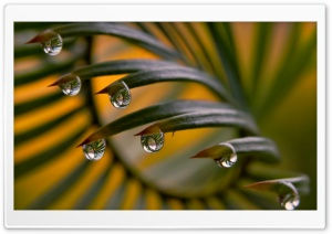 Drops Reflection HD Wide Wallpaper for Widescreen