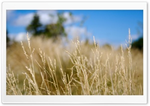 Dry Field HD Wide Wallpaper for Widescreen