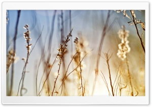 Dry Field Grass HD Wide Wallpaper for Widescreen