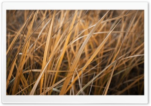 Dry Grass HD Wide Wallpaper for Widescreen
