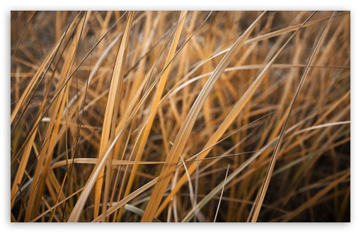 Dry Grass ❤ 4K UHD Wallpaper for Wide 16:10 5:3 Widescreen WHXGA WQXGA WUXGA WXGA WGA ; 4K UHD 16:9 Ultra High Definition 2160p 1440p 1080p 900p 720p ; Standard 4:3 5:4 3:2 Fullscreen UXGA XGA SVGA QSXGA SXGA DVGA HVGA HQVGA ( Apple PowerBook G4 iPhone 4 3G 3GS iPod Touch ) ; Tablet 1:1 ; iPad 1/2/Mini ; Mobile 4:3 5:3 3:2 16:9 5:4 - UXGA XGA SVGA WGA DVGA HVGA HQVGA ( Apple PowerBook G4 iPhone 4 3G 3GS iPod Touch ) 2160p 1440p 1080p 900p 720p QSXGA SXGA ; Dual 5:4 QSXGA SXGA ;