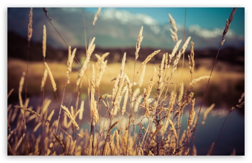 Dry Grass HD wallpaper for Wide 16:10 5:3 Widescreen WHXGA WQXGA WUXGA WXGA WGA ; HD 16:9 High Definition WQHD QWXGA 1080p 900p 720p QHD nHD ; UHD 16:9 WQHD QWXGA 1080p 900p 720p QHD nHD ; Standard 4:3 5:4 3:2 Fullscreen UXGA XGA SVGA QSXGA SXGA DVGA HVGA HQVGA devices ( Apple PowerBook G4 iPhone 4 3G 3GS iPod Touch ) ; Smartphone 5:3 WGA ; Tablet 1:1 ; iPad 1/2/Mini ; Mobile 4:3 5:3 3:2 16:9 5:4 - UXGA XGA SVGA WGA DVGA HVGA HQVGA devices ( Apple PowerBook G4 iPhone 4 3G 3GS iPod Touch ) WQHD QWXGA 1080p 900p 720p QHD nHD QSXGA SXGA ; Dual 16:10 5:3 16:9 4:3 5:4 WHXGA WQXGA WUXGA WXGA WGA WQHD QWXGA 1080p 900p 720p QHD nHD UXGA XGA SVGA QSXGA SXGA ;