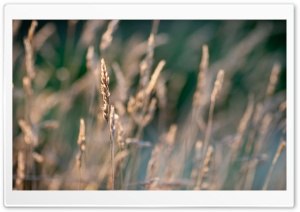 Dry Grass Ultra HD Wallpaper for 4K UHD Widescreen desktop, tablet & smartphone