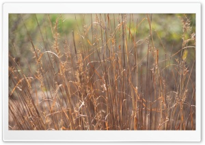 Dry Grass HD Wide Wallpaper for 4K UHD Widescreen desktop & smartphone