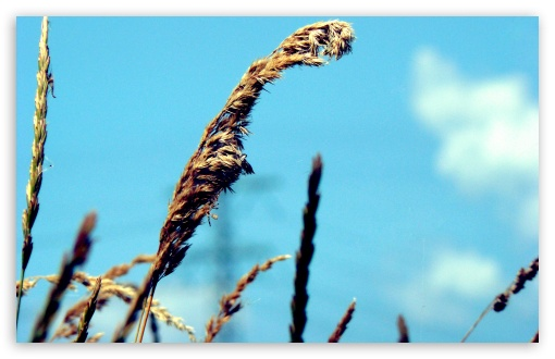 Dry Grass   Blue Sky HD wallpaper for Standard 4:3 5:4 Fullscreen UXGA XGA SVGA QSXGA SXGA ; Wide 16:10 5:3 Widescreen WHXGA WQXGA WUXGA WXGA WGA ; HD 16:9 High Definition WQHD QWXGA 1080p 900p 720p QHD nHD ; Other 3:2 DVGA HVGA HQVGA devices ( Apple PowerBook G4 iPhone 4 3G 3GS iPod Touch ) ; Mobile VGA WVGA iPhone iPad PSP Phone - VGA QVGA Smartphone ( PocketPC GPS iPod Zune BlackBerry HTC Samsung LG Nokia Eten Asus ) WVGA WQVGA Smartphone ( HTC Samsung Sony Ericsson LG Vertu MIO ) HVGA Smartphone ( Apple iPhone iPod BlackBerry HTC Samsung Nokia ) Sony PSP Zune HD Zen ; Tablet 2 Android ;