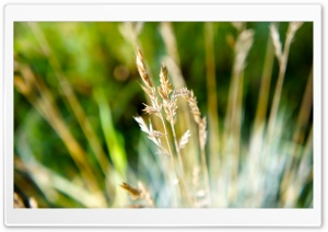 Dry Grass Macro HD Wide Wallpaper for Widescreen