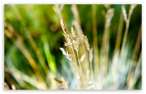 Dry Grass Macro HD wallpaper for Standard 4:3 5:4 Fullscreen UXGA XGA SVGA QSXGA SXGA ; Wide 16:10 5:3 Widescreen WHXGA WQXGA WUXGA WXGA WGA ; HD 16:9 High Definition WQHD QWXGA 1080p 900p 720p QHD nHD ; Other 3:2 DVGA HVGA HQVGA devices ( Apple PowerBook G4 iPhone 4 3G 3GS iPod Touch ) ; Mobile VGA WVGA iPhone iPad PSP Phone - VGA QVGA Smartphone ( PocketPC GPS iPod Zune BlackBerry HTC Samsung LG Nokia Eten Asus ) WVGA WQVGA Smartphone ( HTC Samsung Sony Ericsson LG Vertu MIO ) HVGA Smartphone ( Apple iPhone iPod BlackBerry HTC Samsung Nokia ) Sony PSP Zune HD Zen ; Tablet 2 Android ;