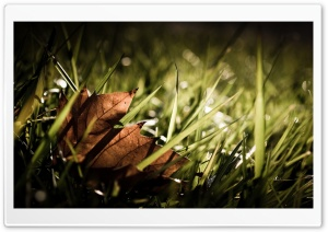 Dry Leaf HD Wide Wallpaper for Widescreen