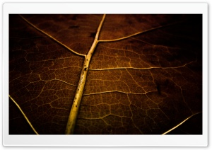 Dry Leaf Texture HD Wide Wallpaper for Widescreen