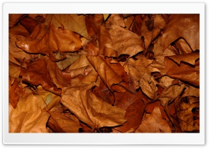 Dry Leaves HD Wide Wallpaper for Widescreen
