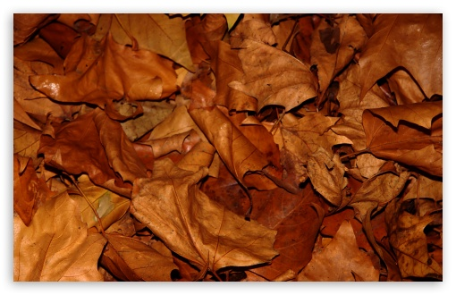 Dry Leaves HD wallpaper for Wide 16:10 5:3 Widescreen WHXGA WQXGA WUXGA WXGA WGA ; HD 16:9 High Definition WQHD QWXGA 1080p 900p 720p QHD nHD ; Standard 4:3 5:4 3:2 Fullscreen UXGA XGA SVGA QSXGA SXGA DVGA HVGA HQVGA devices ( Apple PowerBook G4 iPhone 4 3G 3GS iPod Touch ) ; Tablet 1:1 ; iPad 1/2/Mini ; Mobile 4:3 5:3 3:2 16:9 5:4 - UXGA XGA SVGA WGA DVGA HVGA HQVGA devices ( Apple PowerBook G4 iPhone 4 3G 3GS iPod Touch ) WQHD QWXGA 1080p 900p 720p QHD nHD QSXGA SXGA ;