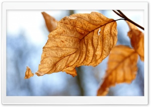 Dry Leaves, Autumn HD Wide Wallpaper for Widescreen