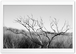 Dry Tree Black And White HD Wide Wallpaper for Widescreen