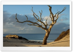 Dry Tree On The Beach HD Wide Wallpaper for Widescreen