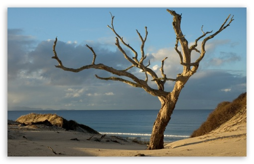 Dry Tree On The Beach HD wallpaper for Wide 16:10 5:3 Widescreen WHXGA WQXGA WUXGA WXGA WGA ; Standard 4:3 5:4 3:2 Fullscreen UXGA XGA SVGA QSXGA SXGA DVGA HVGA HQVGA devices ( Apple PowerBook G4 iPhone 4 3G 3GS iPod Touch ) ; Tablet 1:1 ; iPad 1/2/Mini ; Mobile 4:3 5:3 3:2 16:9 5:4 - UXGA XGA SVGA WGA DVGA HVGA HQVGA devices ( Apple PowerBook G4 iPhone 4 3G 3GS iPod Touch ) WQHD QWXGA 1080p 900p 720p QHD nHD QSXGA SXGA ;