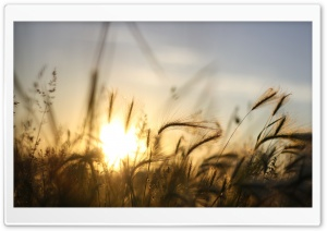 Dry Vegetation, Summer HD Wide Wallpaper for Widescreen