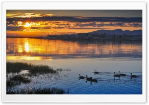Ducks In Sunset Light HD Wide Wallpaper for Widescreen