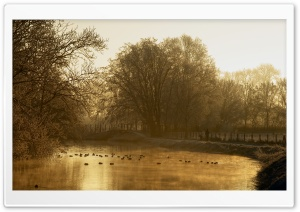 Ducks In The Mist HD Wide Wallpaper for Widescreen